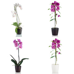 Beautiful orchid flowers in a flowerpot