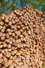 Baumstämme, Forstwirstschaft, Holzindustrie, Kiefernholz