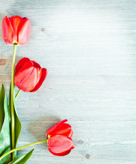 Three red tulips on a wooden texture
