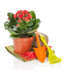 Potted flower and garden utensils