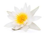 Fotoroleta Water lily