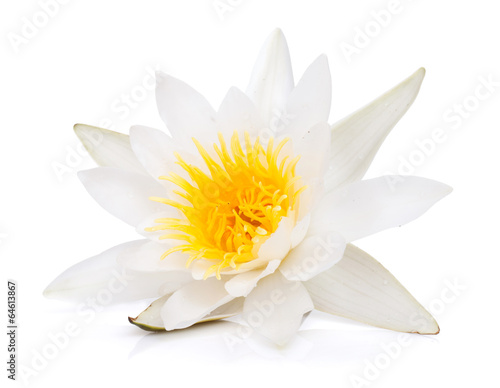 Foto op Canvas Lotusbloem Water lily