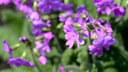 Purple flowers on wind.