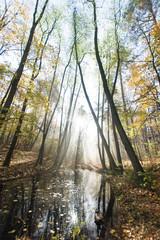 Jesień na leśnych bagnach