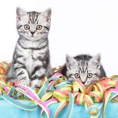 Zwei Kätzchen sitzen in bunten Luftschlangen
