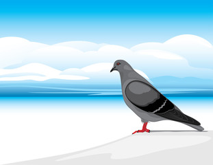 Gray dove on a skyscape background