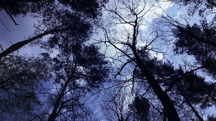 Forest under dark blue sky.