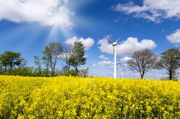 Rapsfeld mit Windkraftwerk