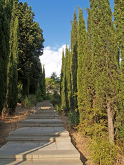 Crimea, Yalta. The cypress avenue in park