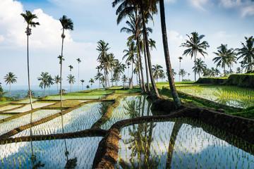 terraced rice fields around Senaru, Lombok, Indonesia, Asia