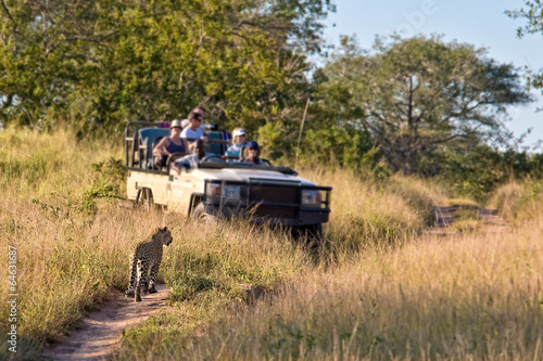 canvas print picture Tourists observing a female leopard, South Africa
