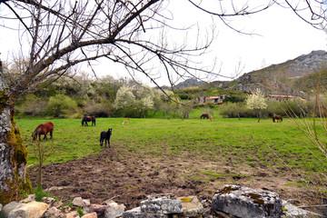 caballos en un prado con hierba y barro en asturias en verano