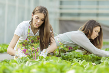 Young women in the garden