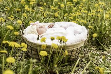 Newborn Mädchen in einem Korb draussen zwischen Blumen