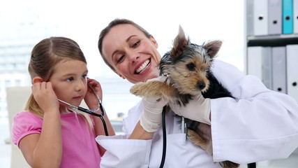 Little girl watching vet checking her yorkshire terrier