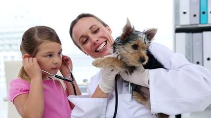 Little girl watching vet checking her yorkshire terrier