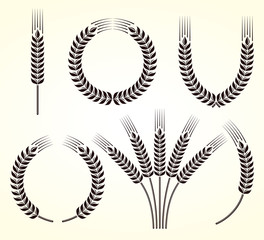 Ears of wheat and rye set. Vector