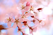 Floral Background of Cherry Blossoms