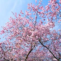 Blütentraum in rosa....