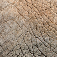 Pattern of rough elephant's skin close-up