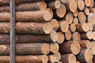 Rohstoff Holz, Baumstämme, Holzindustrie, Forstwirtschaft