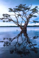 Amazonian rainforest. Laguna Grande, Cuyabeno. Ecuador