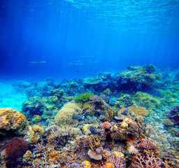 Underwater scene. Coral reef, colorful fish and sunny sky shinin