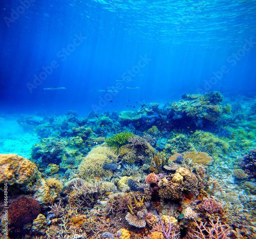 Tuinposter Koraalriffen Underwater scene. Coral reef, colorful fish and sunny sky shinin