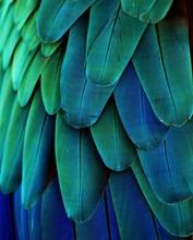 """Постер, картина, фотообои """"Macaw Feathers (Blue/Green)"""""""