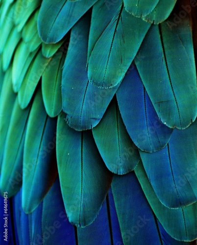 Fotobehang Vogel Macaw Feathers (Blue/Green)