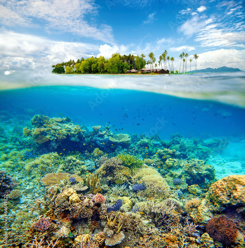 Tuinposter Koraalriffen Beautiful Coral reef
