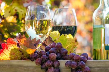 Pfälzer Genuss: Weinprobe im Wingert :)