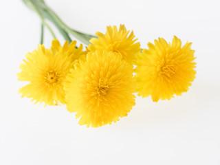 蒲公英の花束