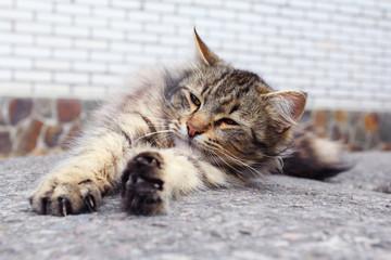 Awakening cat