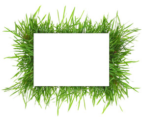 Fresh grass,blank rectangle horizontal banner isolated on white