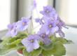 Beautiful violet flowers