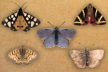 Espositore Farfalle