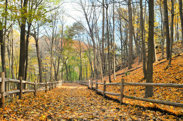 Autumn hiking trail