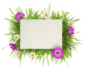 Banner with grass and flowers isolated on white background