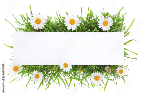Papiers peints Marguerites Banner with grass and flowers isolated on white background