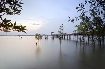 fisherman jetty view from mangrove jungle