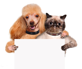 Dog with a cat holding in his paws white banner.