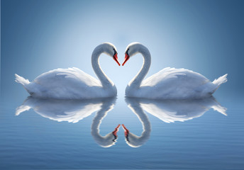 Romantic two swans,  symbol of love.