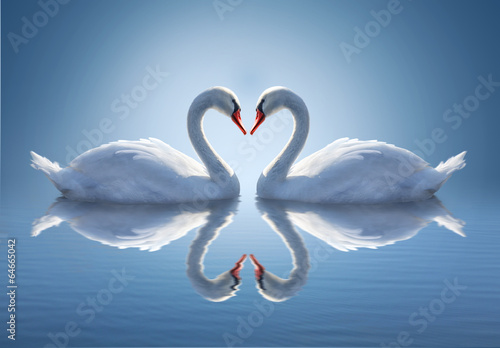 Keuken foto achterwand Zwaan Romantic two swans, symbol of love.
