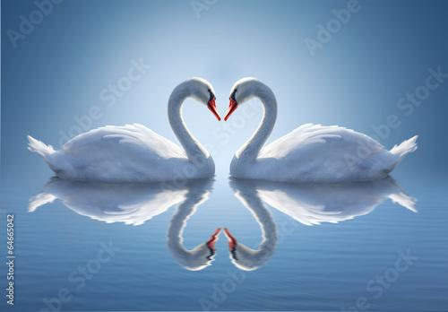 Zdjęcia na płótnie, fototapety na wymiar, obrazy na ścianę : Romantic two swans,  symbol of love.