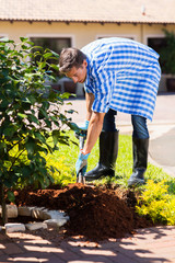 young man planting a shrub in home garden