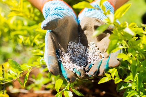 garden fertilizer - 64667877