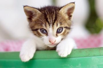 Kätzchen1