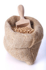 Ripe wheat in a linen bag with a wooden spatula