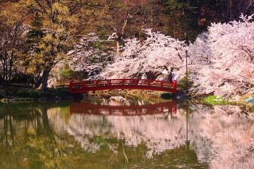 水面に映る桜と赤い橋